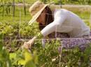 Go GMO-Free | Food & Health 311 | Scoop.it