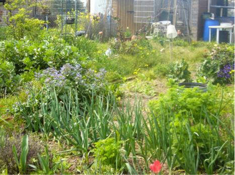 [D'AUTRES JARDINS] Les jardins collectifs, entre nature et agriculture   ideas verdes   Scoop.it