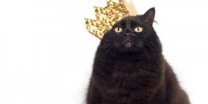 World's Richest Pets   Cats Rule the World   Scoop.it