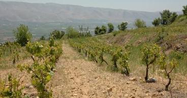 Le caviste Nicolas référence les vins du Domaine Wardy | Charliban Lebnen | Scoop.it