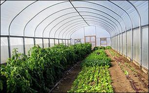 Organic Vegetable Gardening Techniques | Vegetable Gardening Resources | Scoop.it