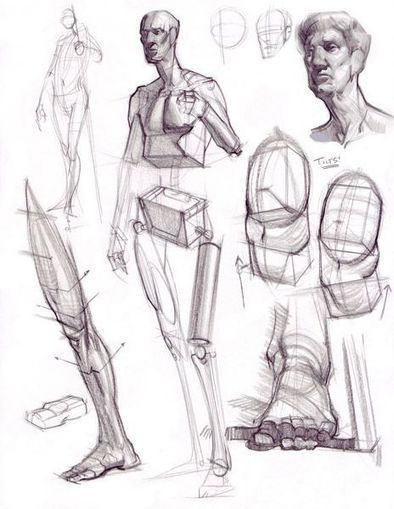 Analytical figure drawing reference guide drawing references and resources scoop it