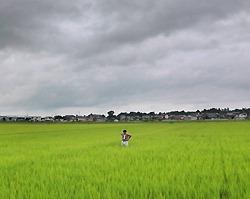 [Eng] Le gouverment pressé de prendre des mesures appropriées pour assurer la sécurité (sanitaire) du riz | The Mainichi Daily News | Japon : séisme, tsunami & conséquences | Scoop.it