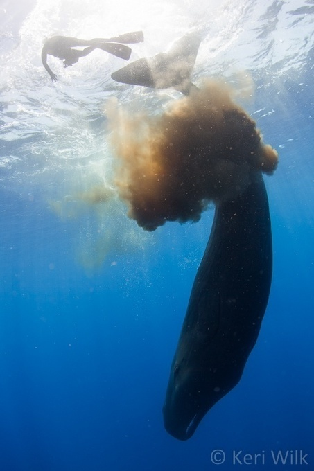 Underwater Photographer Gets Caught in a Sperm Whale 'Poopnado,' Brings Back Photos | Natural Fears | Scoop.it