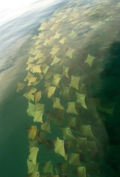 Il regarde autour de son bateau et découvre un spectacle incroyable (photos) | Information sur les océans | Scoop.it