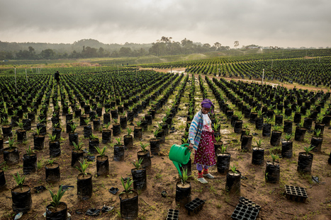 Les sols fertiles d'Afrique peuvent-ils nourrir la planète ? - National Geographic France | Afrique et Intelligence économique  (competitive intelligence) | Scoop.it