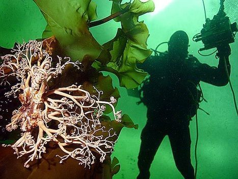 Destination Russia – Diving to experience | All about water, the oceans, environmental issues | Scoop.it