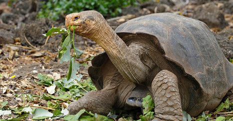 The world's top 10 longest-living animals revealed - The New Daily | The Biggest in the World | Scoop.it