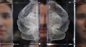 The Brain isArt   EMDR   Scoop.it