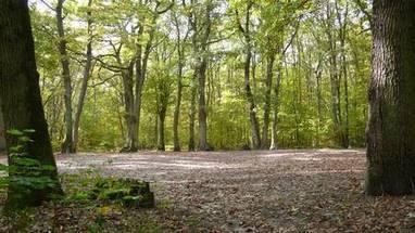Combien d'arbres sur la Terre ? 3.000 milliards, 7 fois plus que prévu !   Research and Higher Education in Europe and the world   Scoop.it
