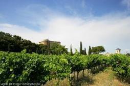 2013 - - FranceAgriMer | Parlez vin! | Scoop.it