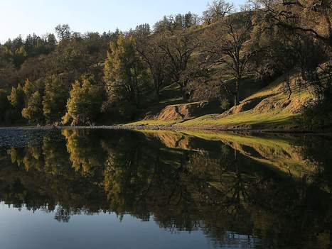 CalPERS to sell 20,000-acre Sonoma County forest | Timberland Investment | Scoop.it