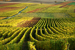 La production mondiale de vin continue de baisser - Liste Vin | Autour du vin | Scoop.it