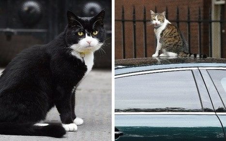 There is a special door for cats in Downing Street, Nick Clegg confirms | Strange days indeed... | Scoop.it