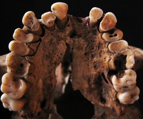 Paleo Human Diets May Have Included Sweets & Carbs | Geology | Scoop.it
