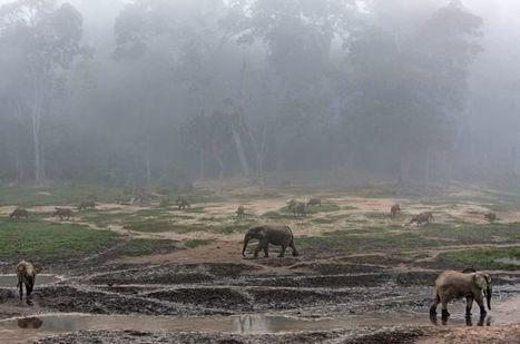 The Elephant Watcher | Upsetment | Scoop.it