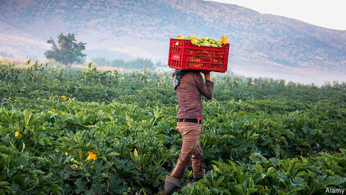 Devaluation gardens - Hobbyists hope to halt hunger in Lebanon by growing their own crops