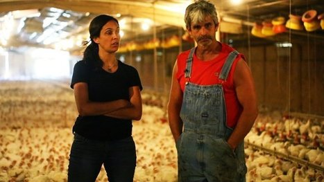 "USDA: Stop labeling factory farm chicken as ""humanely raised"" 