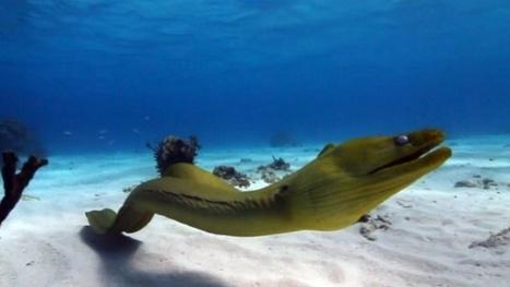 Vidéo HD | Les plus belles plongées des îles Caïmans ! | Plongeurs.TV | Scoop.it