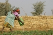 FAO Media Centre: Involving local farmers is key to success of foreign investment | Piccolo Mondo | Scoop.it