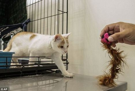 Is your pet right or left handed? The DIY test that uses cheese, sofas and the backdoor to find out | Ask The Cat Doctor | Scoop.it