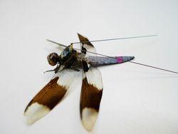 Science : des sacs à dos sur des libellules pour suivre leur activité | EntomoNews | Scoop.it