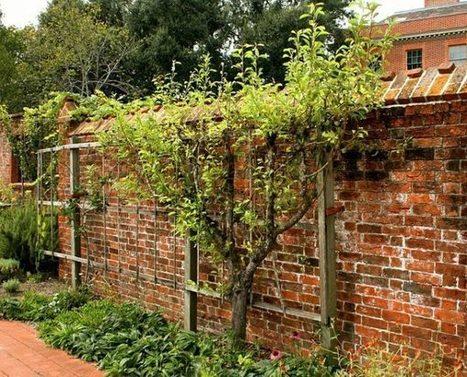 Plantas compañeras para los árboles frutales | Permacultura y autosuficiencia | Scoop.it