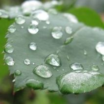 Uses For Rain Water | Vintage Living Today For A Future Tomorrow | Scoop.it