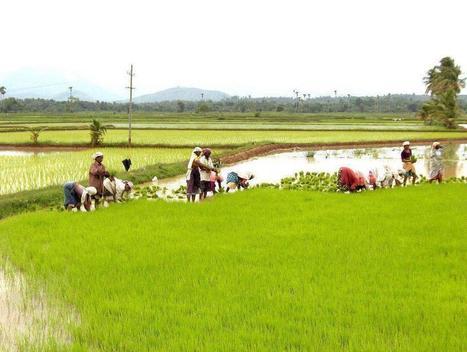 Village Life Importance| Advantages & Disad