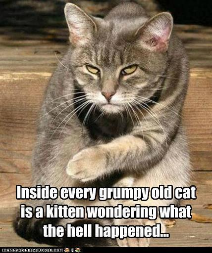 Inside every grumpy old cat - Lolcats 'n' Funny Pictures of Cats - I ...   Cats Rule the World   Scoop.it