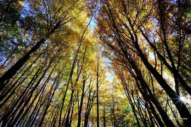 Europe: L'exploitation des forêts s'accroît de manière abrupte