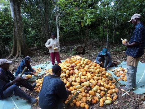 Cameroun - Agroalimentaire: Le Cameroun va investir 9 milliards de ... - Cameroon-info.net | Les techniques, l'innovation, la recherche, l'économie et la commercialisation en agriculture | Scoop.it