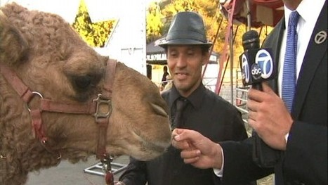 Camel Roams Southern California Streets After Escaping Circus - ABC News (blog) | Deborah | Scoop.it
