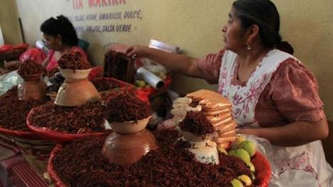Insectos mexicanos, ¿el alimento del futuro? | Entomophagy: Edible Insects and the Future of Food | Scoop.it
