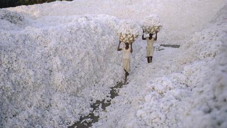 Le coton OGM nécessite un usage croissant de pesticides | Les colocs du jardin | Scoop.it