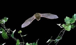 RSPB plans 'bat-friendly' wind turbines at Bedfordshire HQ | Wind Energy and Wildlife | Scoop.it
