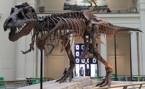 Dinosaur 13 and the Ghost of Tyrannosaurus Sue | Paleontology News | Scoop.it