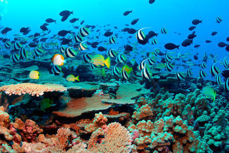 Les Etats-Unis créent la plus grande réserve marine au monde | Information sur les océans | Scoop.it
