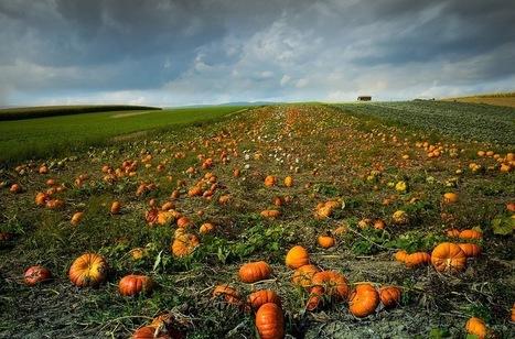 Accaparement des terres : demain, à qui appartiendra la planète ? | Matière agricole | Scoop.it