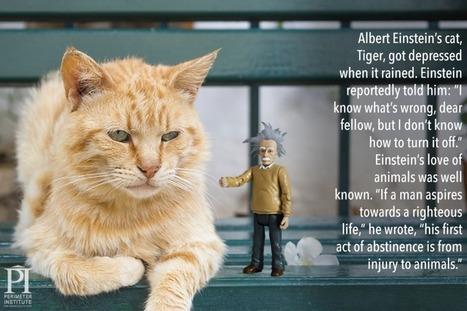 Ο γάτος του Αϊνστάιν | SCIENCE NEWS | Scoop.it