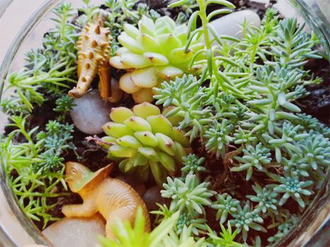 building a terrarium « Quizzical Creatures' Blog | HTM_DIY - Artesanías | Scoop.it