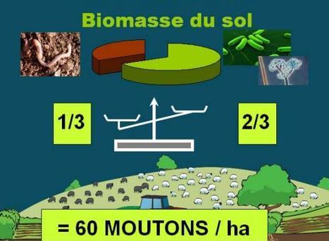 Les êtres vivants du sol équivalent à 60 moutons par hectare | Le commerce du vin, entre mythe et réalité | Scoop.it