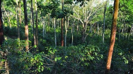 """""""Carbon farming"""" good for the climate, farmers, and biodiversity 