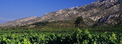 Sainte-Cécile,Suze-la-RousseetVaison-la-Romaine...les 3 nouvelles appellations Villages en Côtes-du-Rhône | Le Vin et + encore | Scoop.it