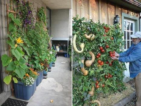 Vertical Gardening, Part I » Green Garbage Project | Wellington Aquaponics | Scoop.it