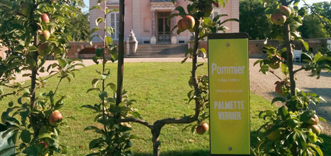 Fruits à tous les étages | biodiversité en milieu urbain | Scoop.it