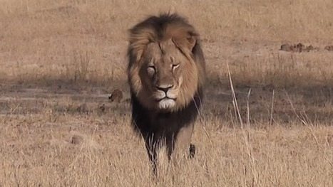 Air Canada bans African animal trophies as freight - CBC.ca | Anonymous Canada News | Scoop.it