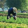 Agriculture soutenue par la  communauté