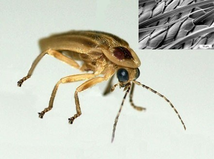 Fireflies' bumpy abdomens may lead to brighter LEDs | EduTech Chat | Scoop.it