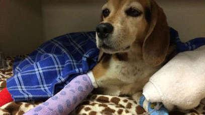 Un chien réuni avec sa famille après avoir disparu deux mois | CaniCatNews-actualité | Scoop.it